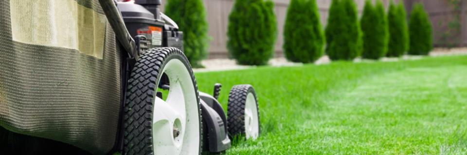 Wij verzorgen al het onderhoud van uw tuin